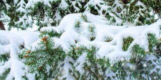 Conceito da beleza do inverno na floresta nevado do abeto imagens de stock royalty free