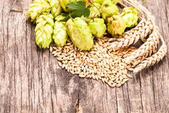 Conceito da cerveja imagem de stock