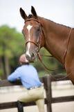 Conceito da corrida de cavalos Fotografia de Stock Royalty Free