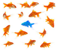 Conceito da diversidade Imagens de Stock Royalty Free