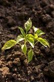 Conceito da ecologia de planta Imagens de Stock