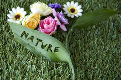 Conceito da folha da natureza Foto de Stock Royalty Free