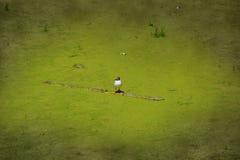 Conceito da gaivota coberto de vegetação da poluição ambiental da ecologia em uma lagoa suja fotos de stock