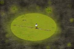 Conceito da gaivota coberto de vegetação da poluição ambiental da ecologia em uma lagoa suja fotos de stock royalty free