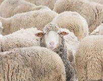 Conceito da individualidade Imagem de Stock