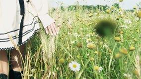 Conceito da liberdade As mãos do ` s da menina tocam no trigo dos spikelets Movimento lento filme