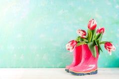 Conceito da mola com tulipas Fotos de Stock