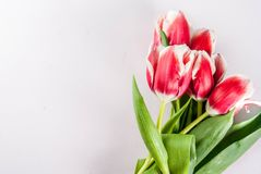 Conceito da mola com tulipas Foto de Stock