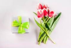 Conceito da mola com tulipas Imagem de Stock Royalty Free