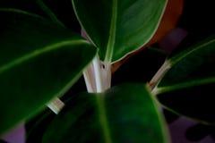 Conceito da natureza, diferença na cor das grandes folhas e ramos imagem de stock royalty free