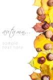 Conceito da natureza do outono Frutas e legumes da queda Fotos de Stock