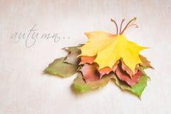 Conceito da natureza do outono Frutas e legumes da queda Imagem de Stock