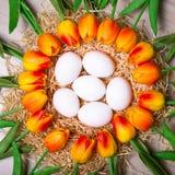 Conceito da Páscoa - próximo acima dos ovos brancos e das flores da tulipa Fotos de Stock