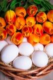 Conceito da Páscoa - próximo acima dos ovos brancos e das flores na cesta Imagens de Stock
