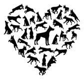 Conceito da silhueta do coração do cão de Dobermann Foto de Stock
