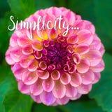 Conceito da simplicidade com dália Fotos de Stock Royalty Free