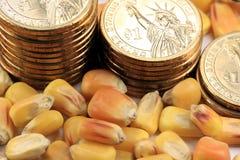 Conceito da troca de mercadoria - moeda dos E.U. das moedas de ouro com milho amarelo Fotos de Stock