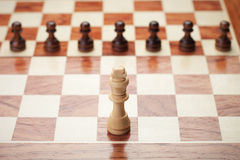 Conceito da xadrez Fotos de Stock Royalty Free