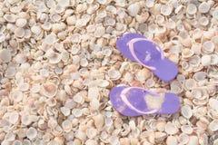 Conceito das férias, fundo tropical da praia das conchas do mar com falhanços de aletas fotos de stock