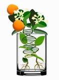 Conceito das plantas transgénicas Imagens de Stock Royalty Free