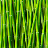 Conceito de bambu do fundo Ilustração do vetor Fotografia de Stock Royalty Free