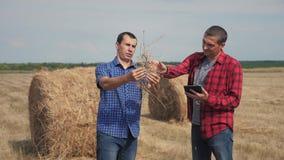Conceito de cultivo esperto da agricultura dos trabalhos de equipe dois trabalhadores dos fazendeiros dos homens do estilo de vid video estoque