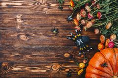 Conceito de Dia das Bruxas com abóboras, as aranhas e erros frescos com flores Opinião da doçura ou travessura de cima de Foto de Stock Royalty Free