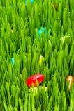 Conceito de Easter - ovos coloridos na grama Imagem de Stock