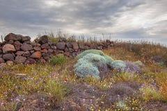 Conceito de jardinagem botânico Imagens de Stock
