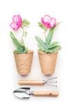 Conceito de jardinagem com ferramentas e flores em uns potenciômetros no fundo branco, vista superior Foto de Stock