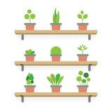 Conceito de jardinagem das plantas de potenciômetro Fotos de Stock Royalty Free