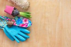Conceito de jardinagem Jacinto da plântula, ferramentas de jardim, tesouras, guita, saco de papel de compra, tipo de flor dos tub Fotografia de Stock