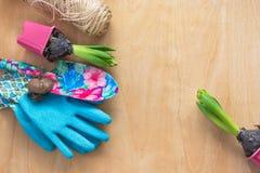 Conceito de jardinagem Jacinto da plântula, ferramentas de jardim, tesouras, guita, saco de papel de compra, tipo de flor dos tub Foto de Stock Royalty Free