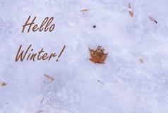 Conceito de primeiros geadas e ar livre da neve, feriados de inverno Configuração lisa natural, vista superior Olá! inverno! Folh imagem de stock royalty free