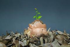 Conceito de salvaguarda das plantas fotografia de stock