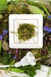 Conceito desconectado, cabo branco do cabo de alimentação desconectado, mentiras entre plantas lisonjeiramente e musgo imagem de stock