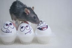 Conceito diferente dos amigos amizade estranha o rato é preto fotografia de stock royalty free