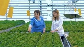 Conceito do alimento de Eco Dois cientistas fêmeas que examinam a colheita em uma estufa vídeos de arquivo