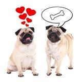 Conceito do amor e do relacionamento - dois cães bonitos do pug sobre o branco Fotografia de Stock