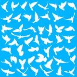 Conceito do amor ou da paz Ajuste pombas das silhuetas Ilustração do vetor Foto de Stock