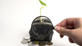 Conceito do banco da finança do negócio de dinheiro, bolsa com planta crescente, crescimento da árvore do dinheiro, moedas dou filme
