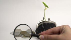 Conceito do banco da finança do negócio de dinheiro, bolsa com planta crescente, crescimento da árvore do dinheiro, moedas dou video estoque