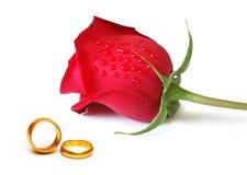 Conceito do casamento - rosas e anéis Foto de Stock Royalty Free
