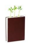Conceito do conhecimento com livro e seedlings imagens de stock royalty free