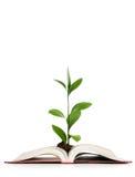 Conceito do conhecimento - folhas que crescem fora do livro Fotos de Stock Royalty Free