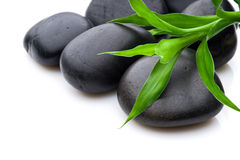 Conceito do crescimento ou do zen Fotografia de Stock