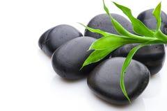 Conceito do crescimento ou do zen Fotos de Stock