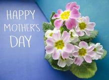 Conceito do cumprimento do dia do ` s da mãe Fundo floral com flores da prímula A prímula delicada floresce em um backgroun do az Foto de Stock