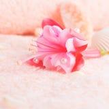 Conceito do curso com o fúcsia cor-de-rosa delicado da flor, conchas do mar Imagens de Stock Royalty Free