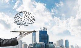 Conceito do desenvolvimento das capacidades da mente Imagem de Stock Royalty Free